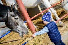 Pferderanch F?tterungspferd des Jungen stockbilder