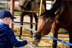 Pferderanch F?tterungspferd des Jungen lizenzfreie stockfotografie