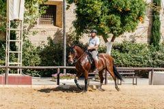 Pferdereiter, der ein braunes andalusisches Pferd in historischem königlichem St. reitet Stockfotografie