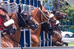 Pferderennanfangstor-Nahaufnahme-Aktion stockfotografie