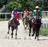 Pferderennen. Stockfotografie