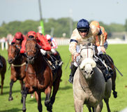 Pferderennen Lizenzfreies Stockfoto