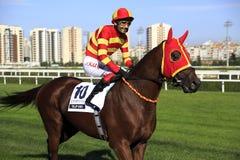 Pferderennen lizenzfreie stockfotografie