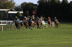 Pferderennen stockfotografie