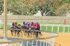 Pferderennen-Aktion Lizenzfreie Stockbilder