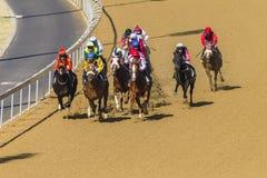 Pferderennen-Aktion Stockbilder