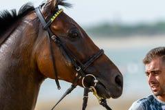 Pferderennen auf Sanlucar von Barrameda, Spanien, 2016 lizenzfreies stockbild