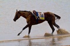 Pferderennen auf Sanlucar von Barrameda, Spanien, im August 2011 Stockbilder
