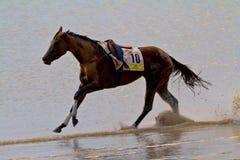 Pferderennen auf Sanlucar von Barrameda, Spanien, im August 2011 Lizenzfreie Stockfotografie