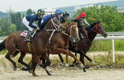 Pferderennen für die prize Eichen Lizenzfreies Stockfoto