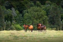 Pferderest auf Weide Lizenzfreies Stockbild