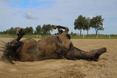 Pferderollen im Sand Sommer Stockbild