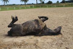 Pferderollen im Sand Sommer Lizenzfreie Stockfotografie