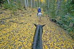 Pferderuecken-Reiten stockfotografie