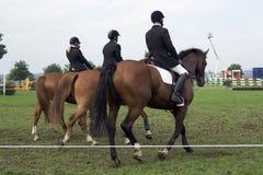 Pferderueckenreiten Stockbild