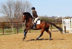 Pferderueckenreiten stockfotografie