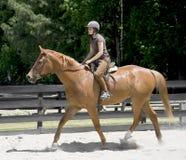 Pferderueckenreiten der jungen Frau Stockfotografie