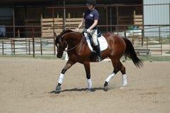 Pferderueckenreitenlektion Stockbild