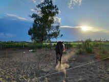 Pferdesand und -himmel stockbilder