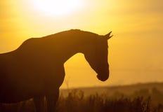 Pferdeschattenbild Stockfotos