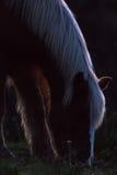 Pferdeschattenbild Stockbilder