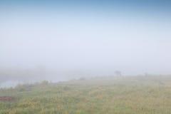 Pferdeschattenbild im dichten Nebel Lizenzfreie Stockfotos