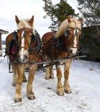 Pferdeschlitten-Fahrt Lizenzfreie Stockfotos