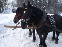 Pferdeschlitten-Fahrt Stockbilder