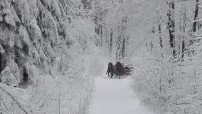 Pferdeschlittenfahrt stock footage