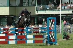 Pferdeshow, die an einem großen Ereignis springt lizenzfreies stockbild