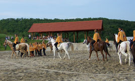Pferdeshow Ungarn Stockbilder