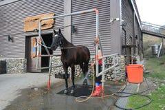 Pferdeshowereignis in Taiwan Stockfoto