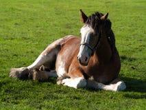 Pferdesitzen Lizenzfreie Stockfotos