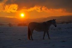 Pferdesonnenuntergang stockbilder