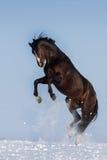 Pferdespiel Stockfotografie