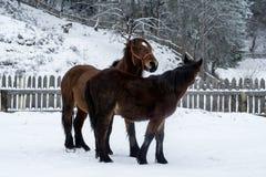 Pferdespielen Stockfoto