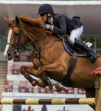 Pferdespringender Wettbewerb Stockfoto