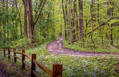Pferdespuren und -Wanderwege im Wald lizenzfreies stockbild