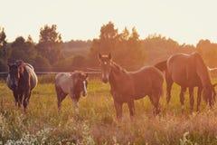 pferdestärken Lizenzfreie Stockfotos
