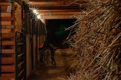 Pferdestall Lizenzfreie Stockbilder