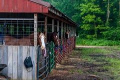 Pferdestall Stockbilder