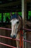 Pferdestall Stockfotografie