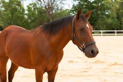 Pferdestellung Lizenzfreies Stockfoto