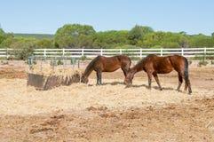 Pferdestift Stockbilder