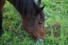 Pferdesuffolk-Herbst lizenzfreie stockbilder