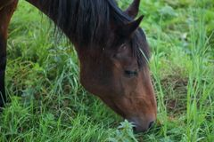 Pferdesuffolk-Herbst stockbilder