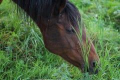 Pferdesuffolk-Herbst stockbild