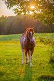 Pferdetieraufstellung auf einem Ackerland bei Sonnenuntergang Stockfotos