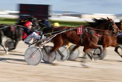 Pferdetrabrennen im Palma de Mallorca Hippodromverschieben stockbilder