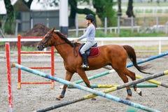 Pferdetraining Stockbild